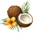 http://www.freepngimg.com/download/coconut/5-2-coconut-png-picture.png
